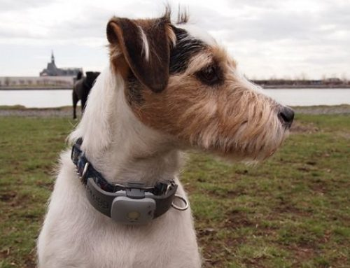 The Function And Benefits Of Pet Tracker